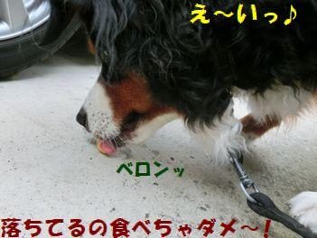 食べちゃえ~!