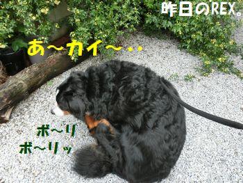 昨日は・・・カイカイ~ッ!