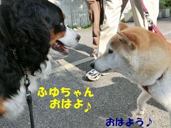 ふゆちゃん~!おはよなの!!