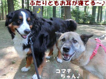 コマチちゃんと会えた~!