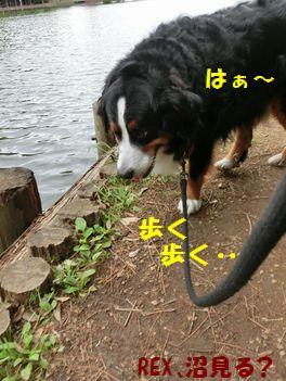 歩くだけじゃ楽しくな~い・・・。