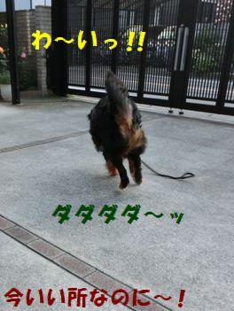 わ~いっ金環よりも走っちゃえ~!