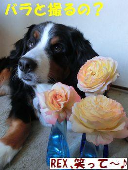 バラとお家で撮るの~?