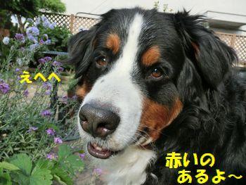 赤いの見る~??