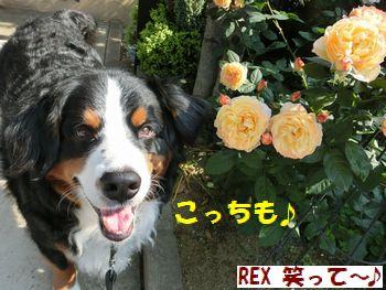 笑顔と薔薇なの!!