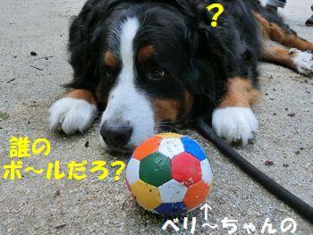 誰かのボール置かれたの。