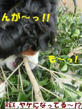 んがんがんが~っ!!!