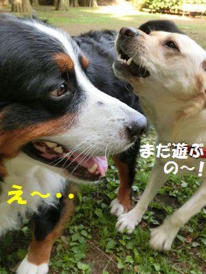 まだ遊ぶの~!?え~!!
