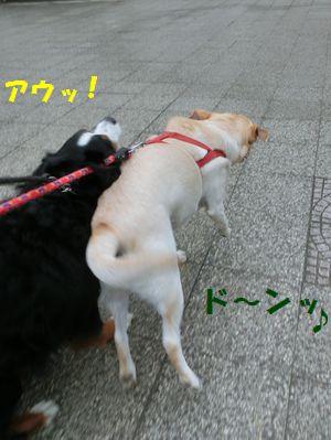 ど~んって!マロンちゃん勢いすごいって!!