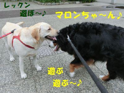 遊ぶ!遊ぶ~!遊ぶ~!!