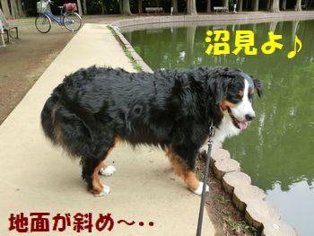 沼に向かって落ちそうなの~!