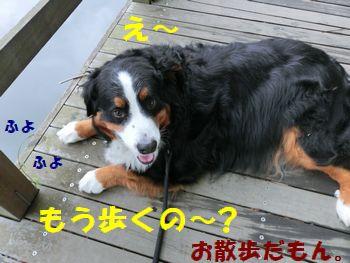 お散歩だけどい~じゃん~!!
