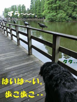 歩こう歩こう~あ、ハトさん!