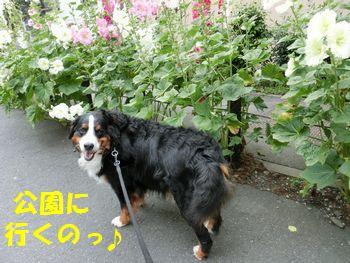 お散歩っぽ~♪
