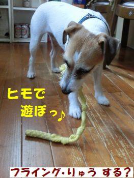 ヒモ遊び!