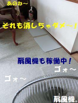 せんぷうきもだめ~!