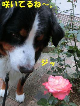 お花が咲いてる~。