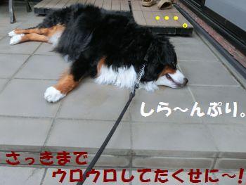 お散歩に行く気はありませ~ん。