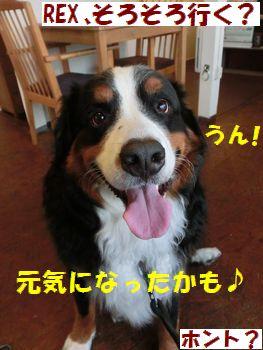 うん♪平気~!!