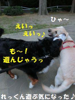 も~!遊んじゃう