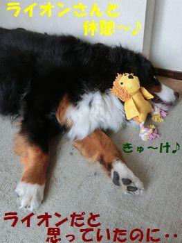 ライオンさんときゅ~け~!