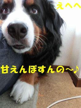 甘えん坊た~いむ!!