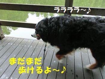 元気に歩けちゃうもんね~!