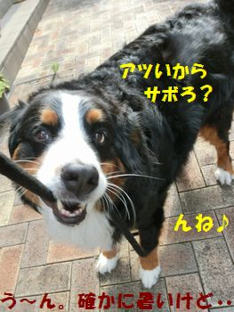アチアチなのにお散歩ムリ~!
