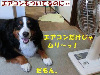 エアコンだけじゃムリムリ~!!