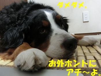 まじ暑いの!