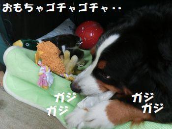 オモチャと一緒にガジガジ!!