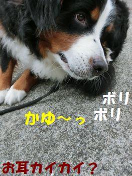 カユカユカユ~!!