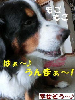 しあわせ~♪はーとうまっ!!