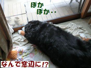 窓辺ぽかぽか・・・