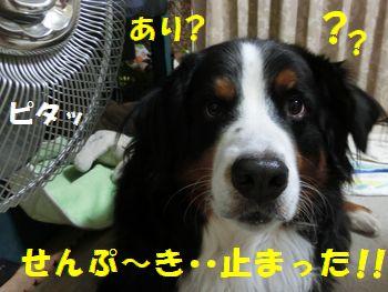 せんぷ~きとまった!!!?