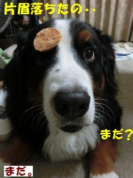 落ちた・・食べていい??