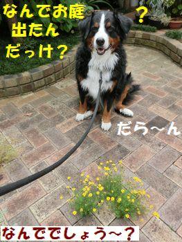 なんでお庭でたんだっけ??