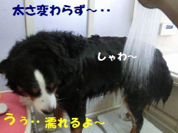 なんでお風呂なの・・?