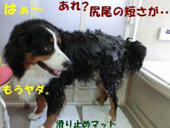なんで洗わないとダメなの・・・。