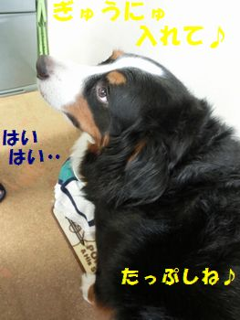 たっぷしぎゅ~にゅ~ぷりーず!!