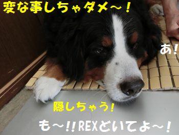 なんか変なこと禁止~!!