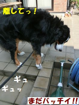 バケツで洗う~!!