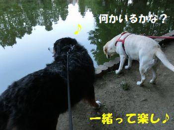 一緒はい~ね!!