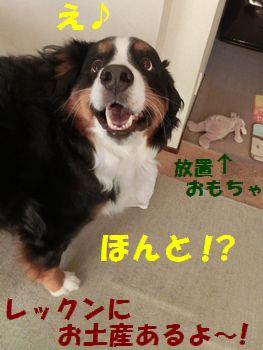 おみやげあんの!?
