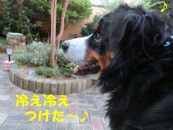 冷え冷えそうちゃく~!!