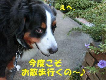 やっとお散歩いくのです~!