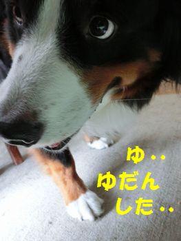 ゆだんした~!!!