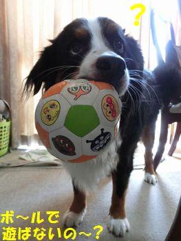 ボールで遊ぶべき!!