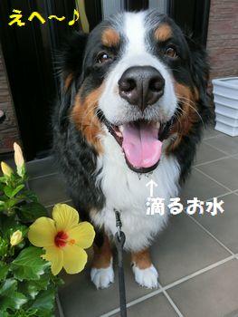 おみずのんでお花と撮るの~!!