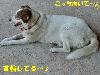 ワンコさ~ん!!誰かの飼い犬??